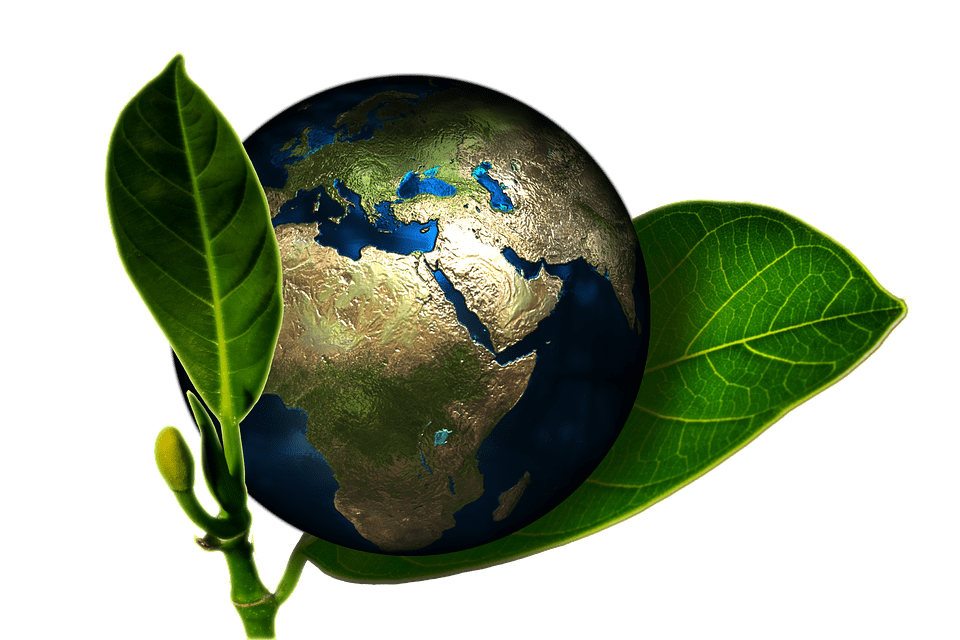 Green Earth: Why Is It Important?