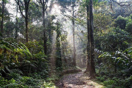The Amazon Rainforest And Its Importance