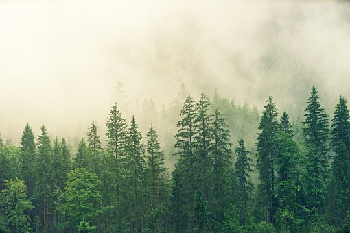 Here Are The Advantages Of Forests And Environment