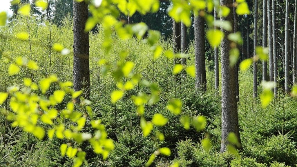 Importance Of Forest That You Must Know