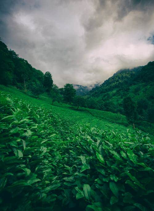 The Arts: Pendragon : Maintain A Green Nature In Earth