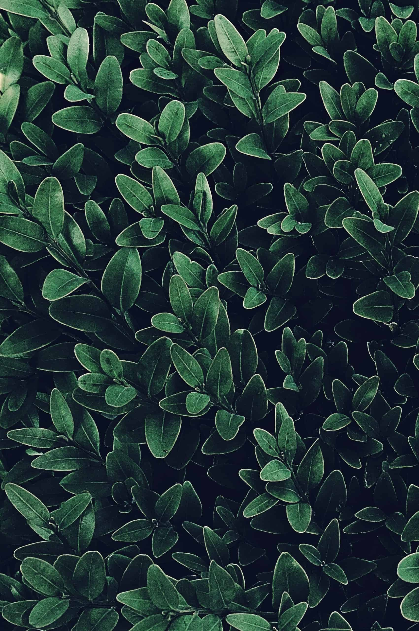 Why Green Plants Are Important For The Environment?