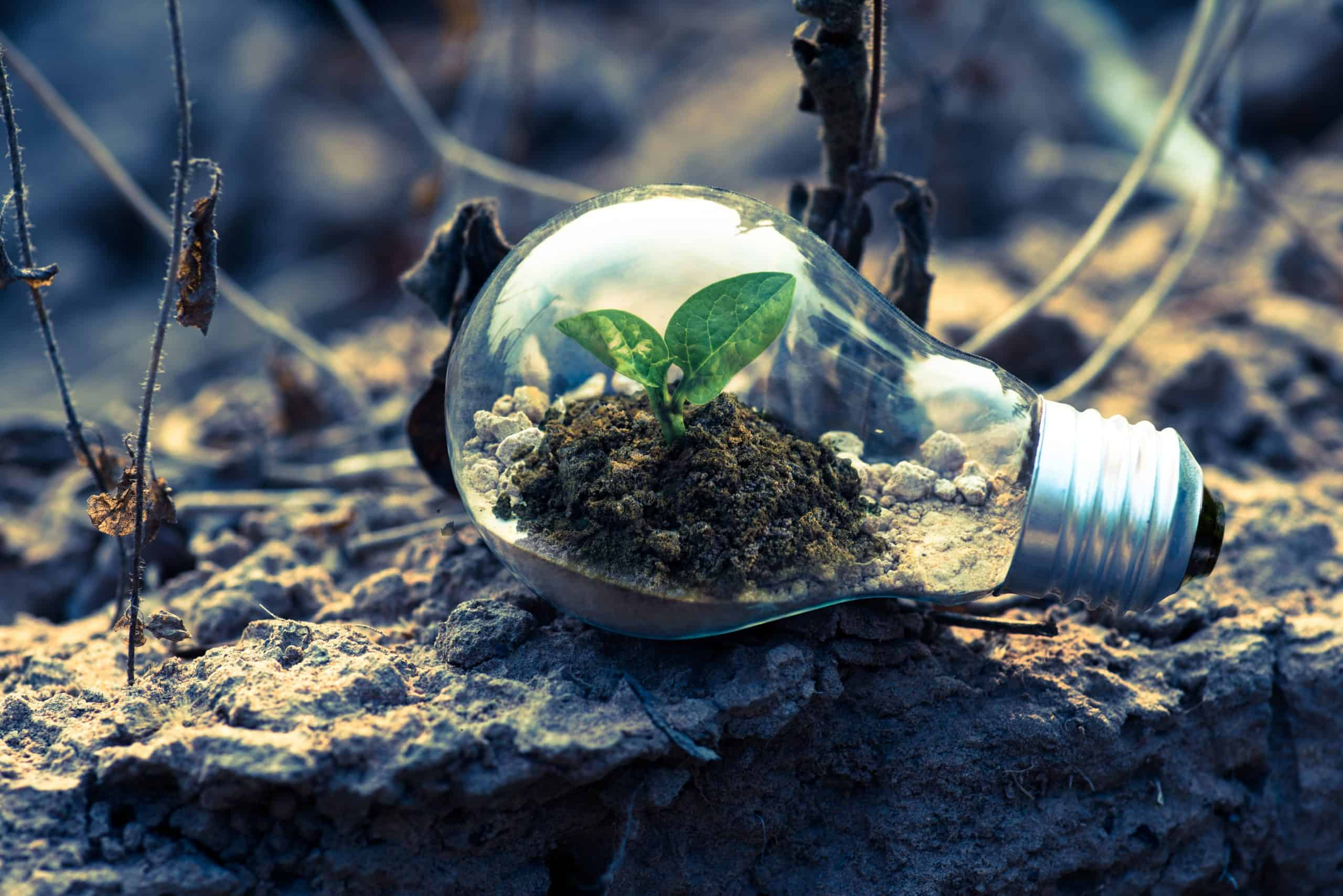 Advantages Of Going Green: Help The Environment