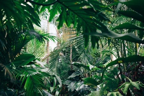 The Different Uses Of Plant Habitat