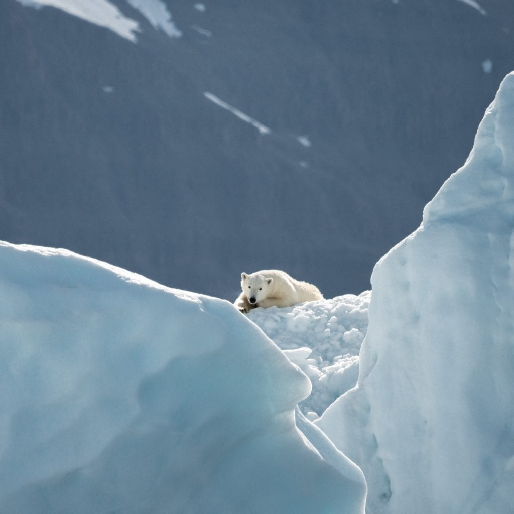 Obtain More Knowledge About Polar Bear Habitat
