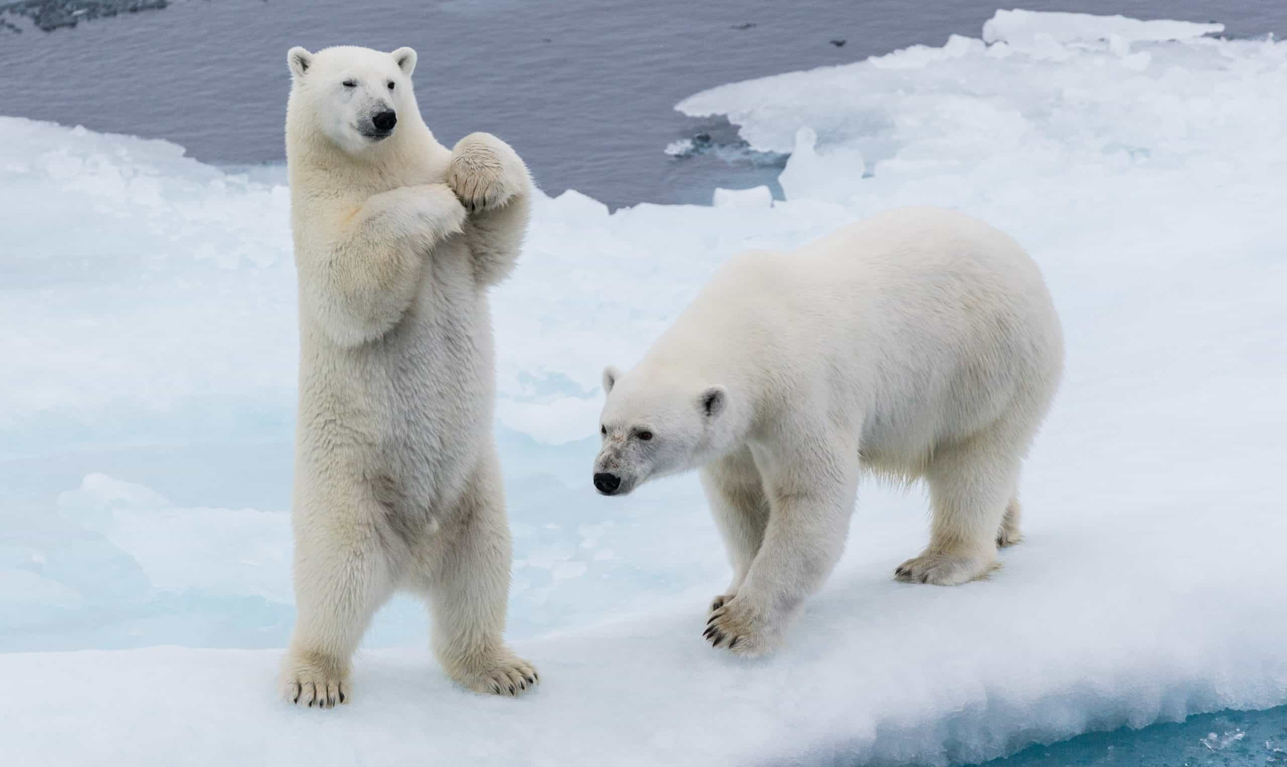 10 Shortcuts For Polar Bear Habitat That Gets Your Result In Record Time