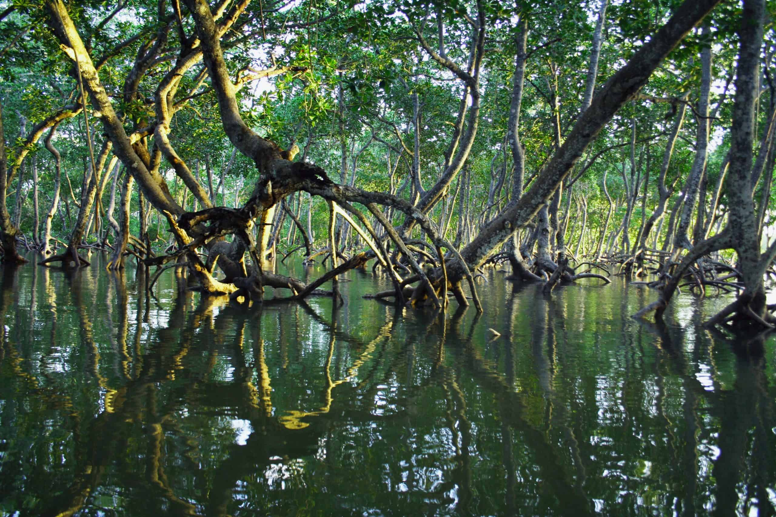 Here Are Answers To Your Problems About Mangrove Forest