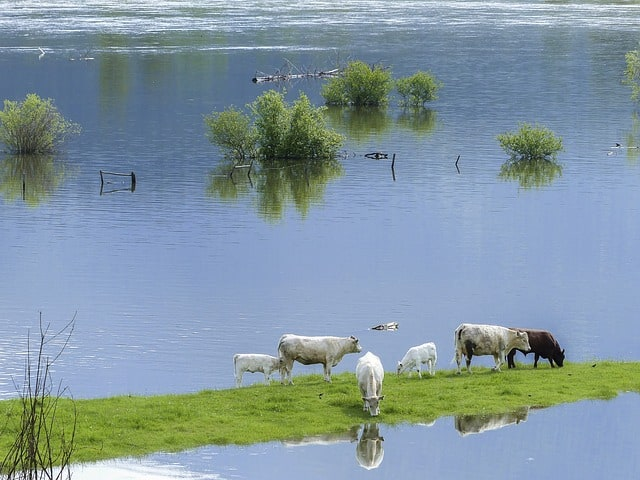 A herd of sheep standing next to a body of water