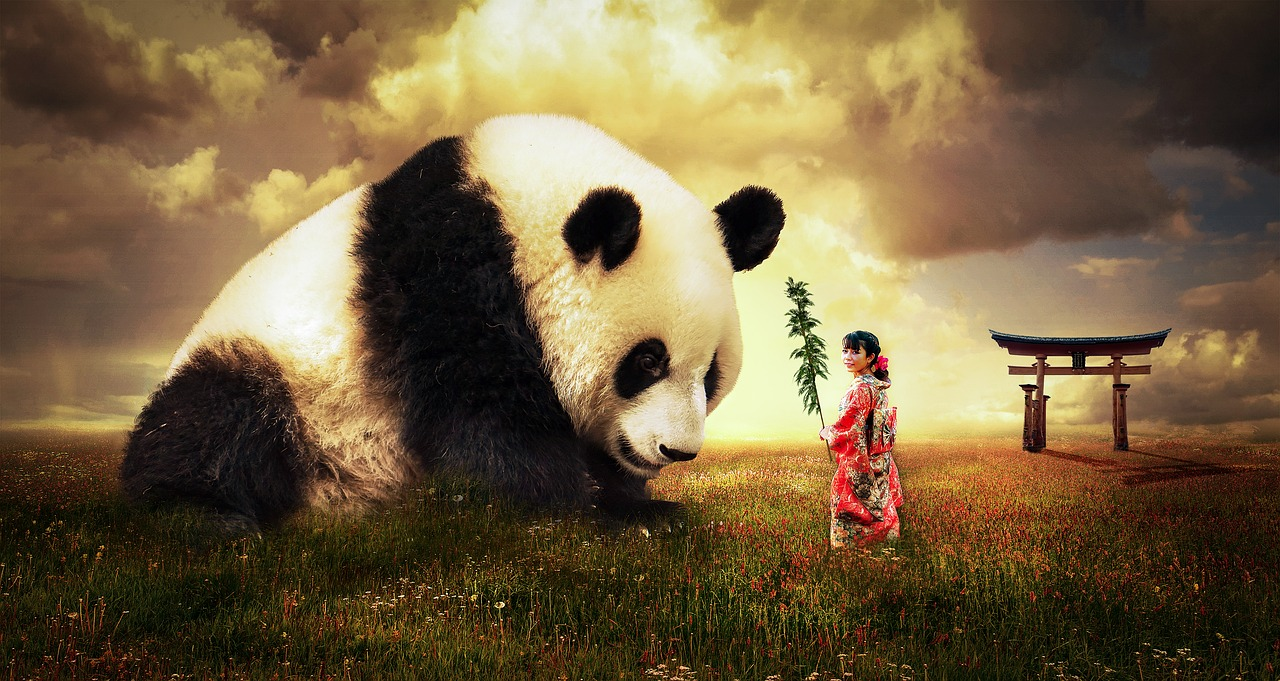 A panda bear sitting on top of a grass covered field