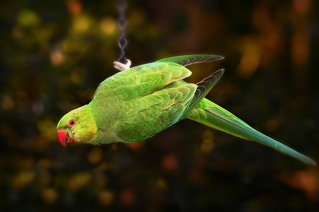 A parrot sitting on top of a green leaf