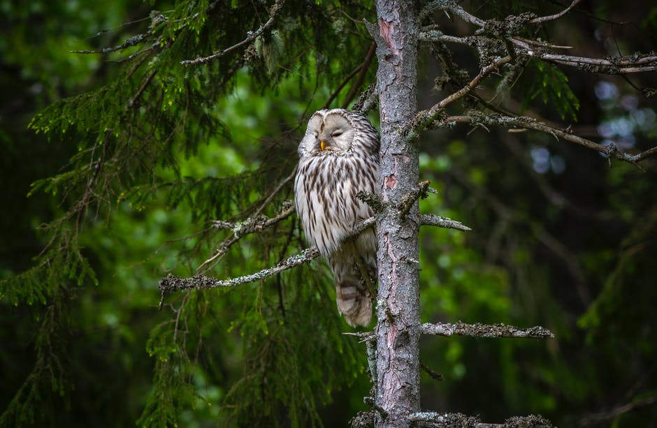 An owl perched on a tree branch