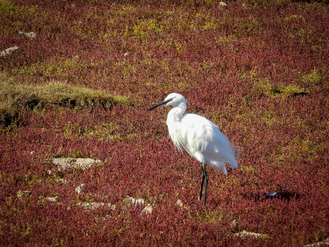 A bird standing on top of a grass covered field